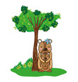 female bear wild animal and son vector image vector image