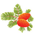 green spruce branch with two cones isolated vector image vector image
