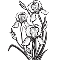 sketch of iris flowers vector image vector image