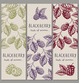 set vintage hand drawn blackberry raspberry vector image