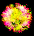 explosion flower design vector image