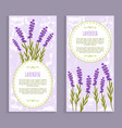 lavender collection purple vector image vector image