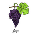 poster of coloured calligraphy red grape vector image