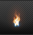 realistic burning brush fire flame element vector image