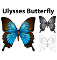 doodle animal for ulysses butterfly vector image