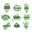 organic eco farm vegetables green lettering vector image vector image