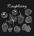 raspberries graphic sketch vector image