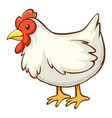 white chicken on white background vector image vector image