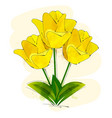 yellow tulip flower isolated on white background vector image vector image