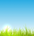 Green fresh grass and blue sky summer background vector image