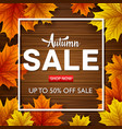 autumn sale background with autumn leaves vector image vector image