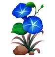 blue morning glory and rocks on white background vector image vector image