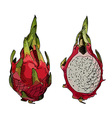 Dragon fruit or pitahaya vector image vector image