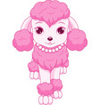 pink poodle vector image vector image