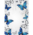 frame with butterflies morpho vector image vector image