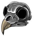 monochromatic realistic red bird skull vector image