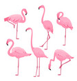 a set of pink flamingos in various poses vector image
