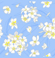 plumeria flowers on a blue background vector image vector image