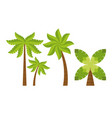 beach tree palms vector image vector image