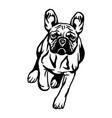 french bulldog dog - isolated vector image vector image