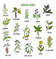 anodyne herbs hand drawn set of medicinal plants vector image vector image