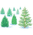 a set of pine trees fir trees with varying vector image