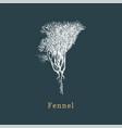 fennel sketch drawn spice herb in vector image vector image