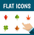 flat icon leaves set of alder hickory leafage vector image vector image