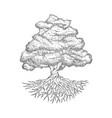 hand-drawn tree vector image