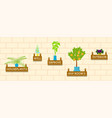 horizontal banner template with houseplants vector image vector image