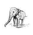 old big elephant on the white background vector image