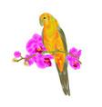 sun conure parrot tropical bird vector image vector image