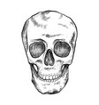 drawing human skull with hatching front view vector image