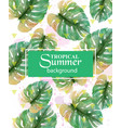 summer tropic palm leaves exotic hot vector image
