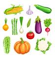 vegetable watercolor icon organic farm veggies vector image