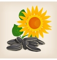 Yellow sunflowers and sunflower seeds vector image vector image