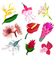 set of tropical flowers in realistic style vector image