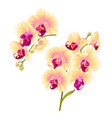 branches orchids yellow flowers tropical plant vector image vector image