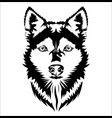 face dog vector image vector image