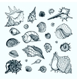 Collection with various sea shells vector image vector image