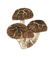 hand drawn shiitake mushroom vector image vector image