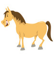 horse cartoon animal character vector image vector image