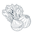 lettuce and onion hand draw vector image vector image
