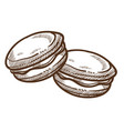 macaroon dessert pastry food cookie isolated vector image vector image