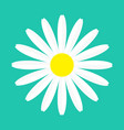 white chamomile daisy flower round icon camomile vector image vector image