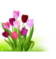 bouquet tulip spring banner vector image vector image