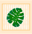 foliage monstera trend element of the palm leaf vector image
