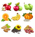 fruits vegetables nuts sunflowers seeds vector image