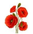 Poppy flower poster vector image
