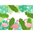 tropical flamingo frame background vector image vector image
